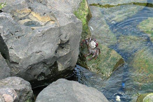 La Palma 2005 037