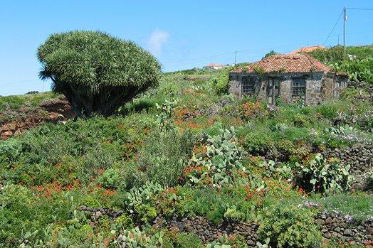 La Palma 2005 075