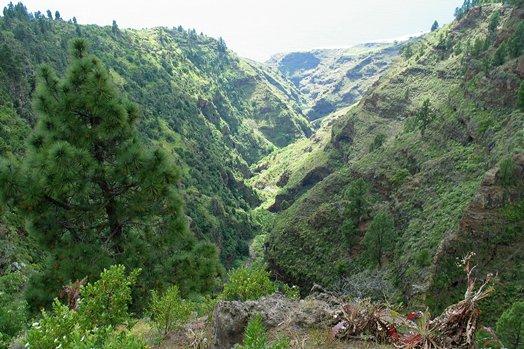 La Palma 2005 076
