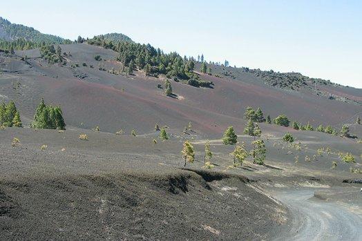 La Palma 2005 090