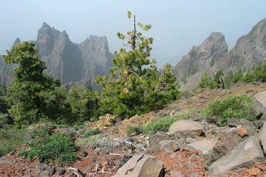 La Palma 2005 099