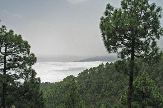 La Palma 2005 101