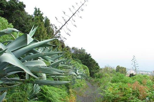 La Palma 2005 105