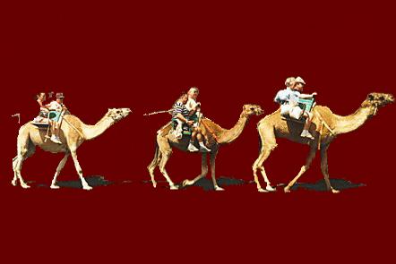 Lanzarote 2001 28_kamelen
