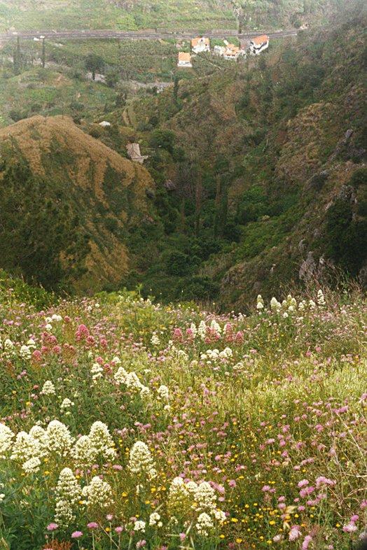 Madeira 2000 50