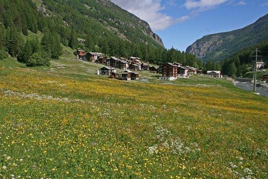 Zwitserland juni 2008 066