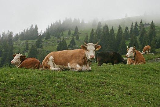 Zwitserland juni 2008 081