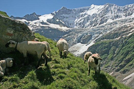 Zwitserland juni 2008 155