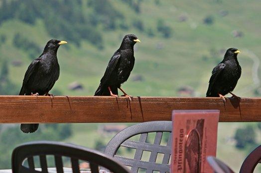Zwitserland juni 2008 159