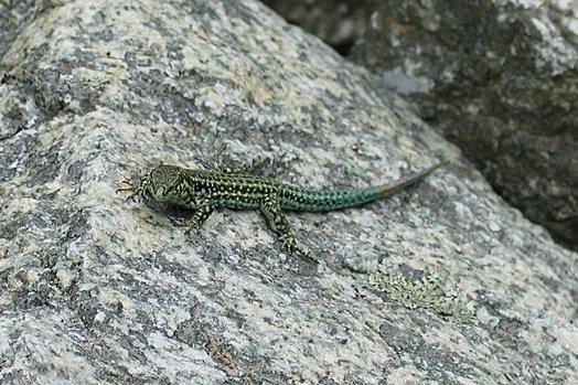 Corsica061